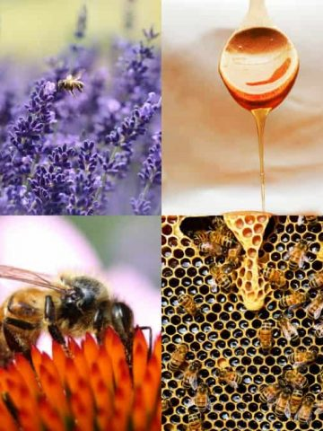 a collage with pictures of honey, bees, and lavender
