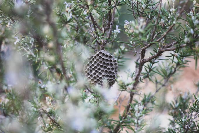 a beehive in a tree