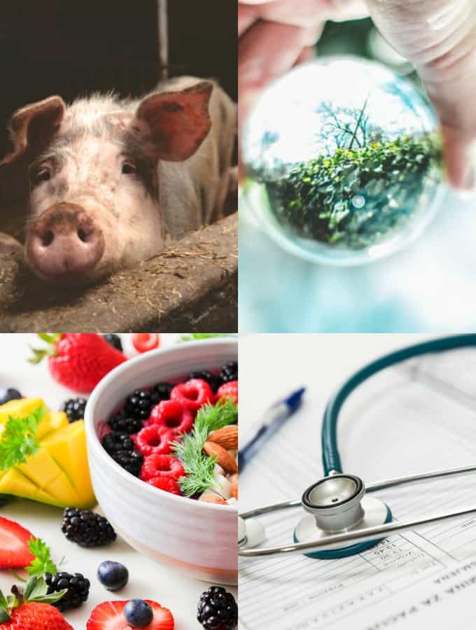 a collage showing reasons for a vegan diet (animals, environment and health)